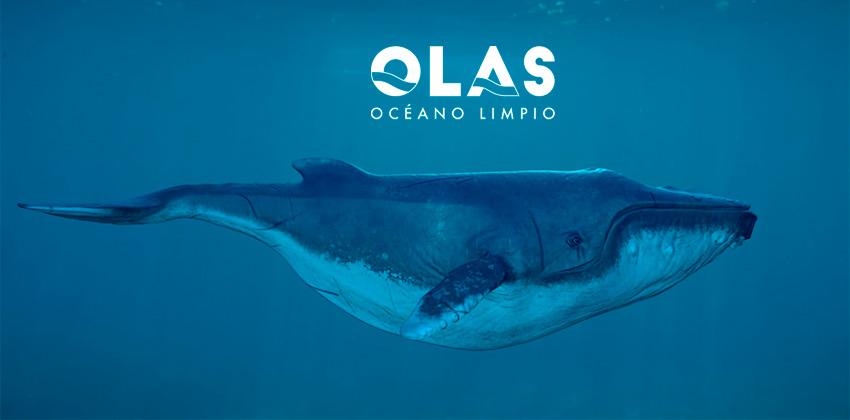 OLAS Océano Limpio Cierre El 2019 Con Importantes Resultados Que Evitarán La Llegada De Residuos De Plástico A Las Costas De Quintana Roo.