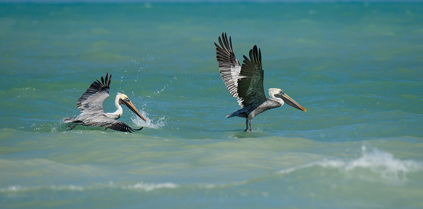 OLAS Promueve La Separación Y Reciclaje De Plásticos Para Reducir Su Llegada A Las Costas De Quintana Roo.